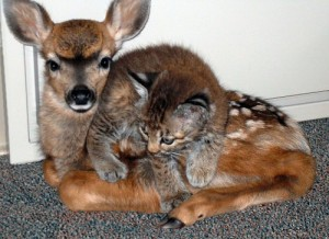 rescue-deer-kitty