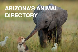 arizona-animal-directory