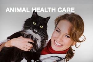 animal-health-care