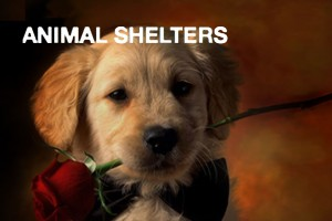 animal-shelters