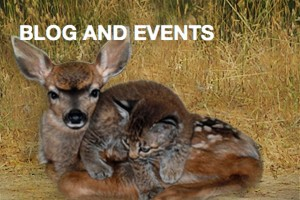 blog-events