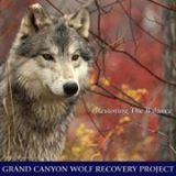 grand-canyon-wolf-recovery-project