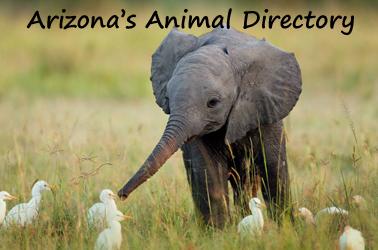 wildlife-elephant-birds