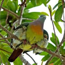 mother-baby-birds