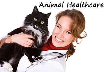 pet-healthcare