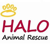 halo-animal-rescue