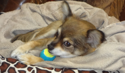 winston-healthy-dog
