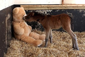 foal-and-teddy-bear